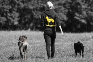Hundetraining München