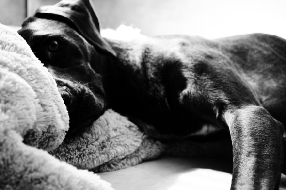 089dogs Hundetraining Sunny